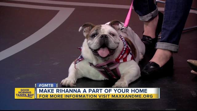 bulldog investors meet rihanna a pet worthy of your investment 2847