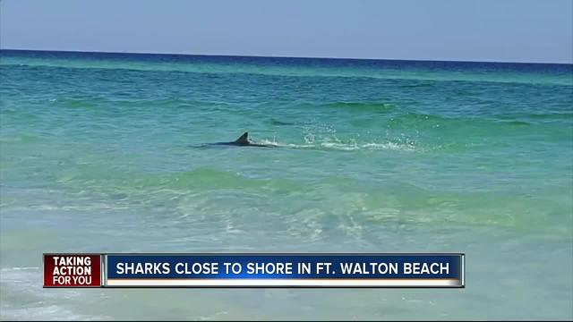 VIDEO Multiple Sharks Spotted Very Close To Okaloosa Island In Florida