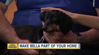 Rescues in Action: Bella needs forever home