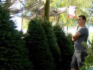Christmas tree shortage hits the Bay area