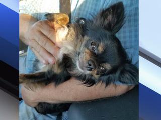 FOUND: Owner finds missing service dog