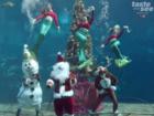 Christmas with mermaids at Weeki Wachee Springs