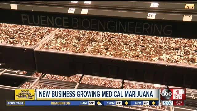 Ruskin business now growing marijuana