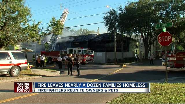 Cats and dogs rescued from two-alarm fire at townhomes in Tampa