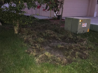 Wild pigs destroy dozens of Wesley Chapel lawns