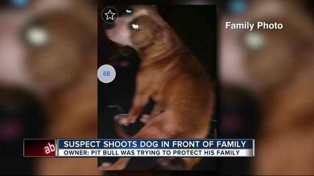 Dog shot as 2 suspects flee from Hillsborough deputies