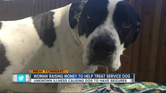 Tampa woman fundraising for her sick service dog suffering from seizures