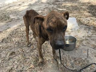 Emaciated dog saved after neighbors take action