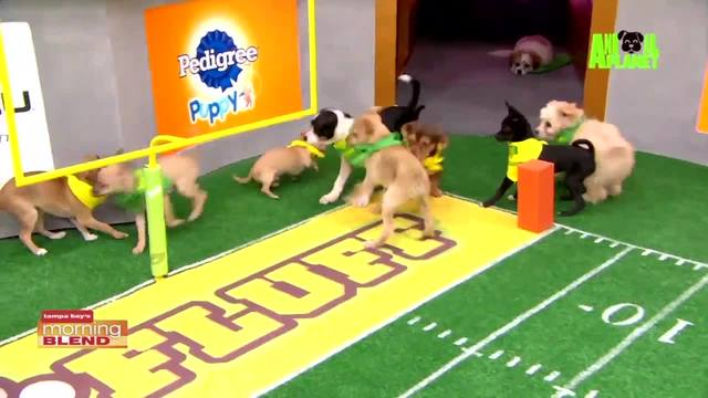 Local Dogs Featured In Puppy Bowl XIV