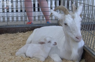 PHOTOS: Animals at the Florida State Fair