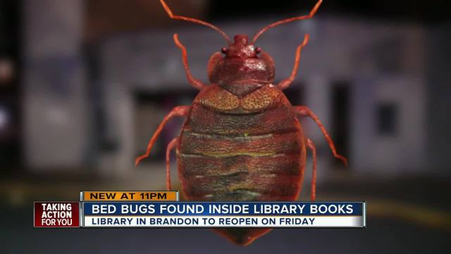 Brandon Regional Library closes temporarily after staff finds bed bugs…