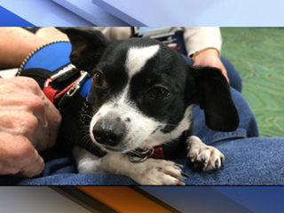 Tampa woman misses flight over dog mix-up