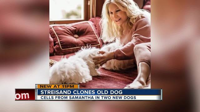 Barbra Streisand Had Her Cherished Dog Samantha Cloned
