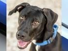 Pet of the week: Tucker is a fun Lab mix
