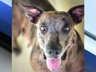 Pet of the week: Riley wants a family of her own