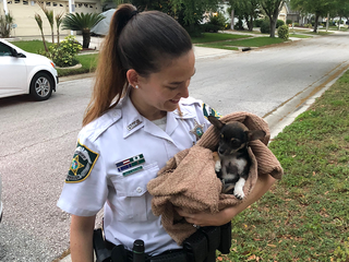Deputies rescue puppy stuck in storm drain