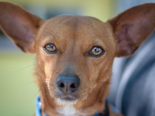 Pet of the week: Red needs a loving home