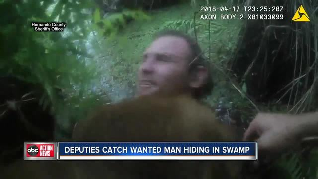 Suspect arrested after hiding in swamp