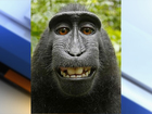 Court rules monkey cannot sue over selfie