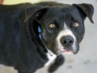 Pet of the week: Max is a happy go lucky dog
