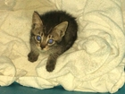 Pasco firefighters rescue kitten from car engine