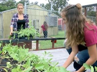 FFA students restore coastline with 500 plants