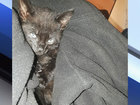 Kitten thrown from moving car in Wesley Chapel