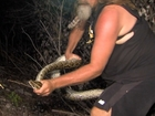 1,000th snake caught in python control program