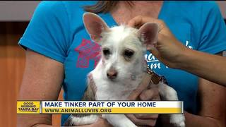 Rescues in Action 06/16 | Tinker needs a home