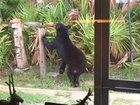 Officials set trap for bear in Crystal River