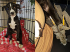 Pencils taped to broken legs of abandoned puppy