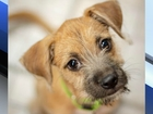 Pet of the week: Mollie is full of puppy energy
