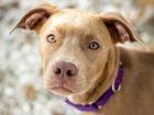 Pet of the week: Echo loves kids & other dogs