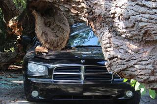 PHOTOS: Massive tree falls on home, car
