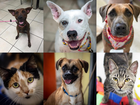 PHOTOS: 20+ adoptable pets in the Tampa Bay area