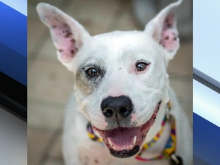 Pet of the week: Olivia is eager to please