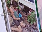 Neighbor's fumigation kills couple's cat