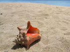 Tourist jailed for collecting conch shells in FL