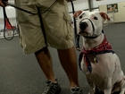 Shelters dogs helping veterans cope with PTSD