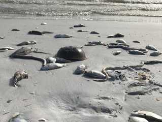 High concentrations of red tide lingering in FL