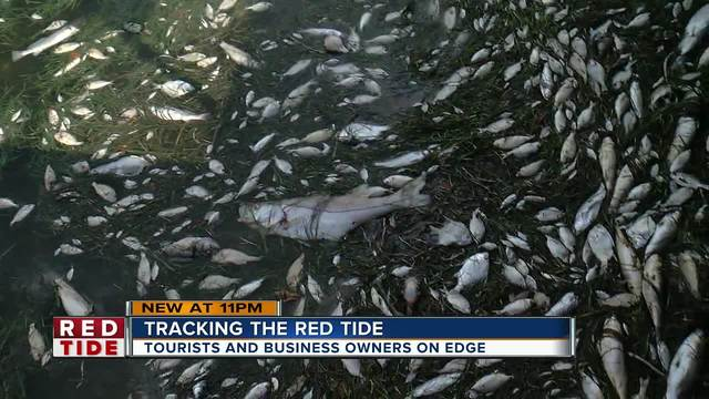 Effects from red tide being felt farther north at Holmes Beach