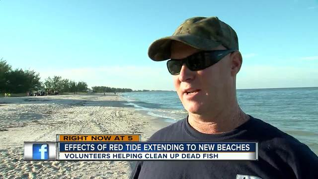 Dead fish from red tide now showing up as far north as Holmes Beach in Bradenton