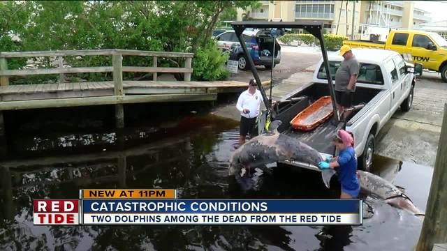6 bottlenose dolphins found dead in Sarasota County in 24-hours