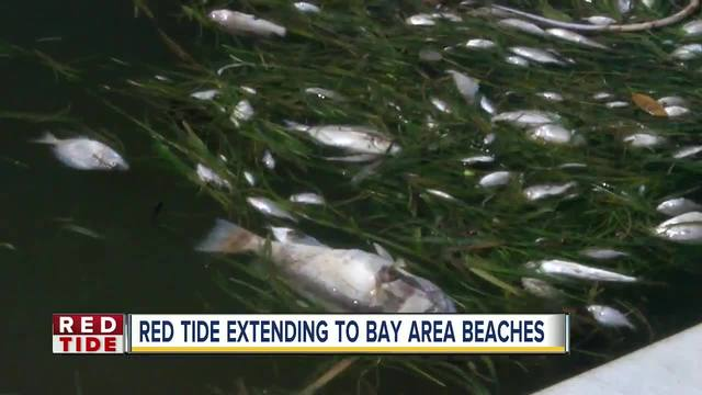 Marine life being harmed by effects of red tide