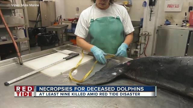 9 bottlenose dolphins found dead in Sarasota County in 36-hours