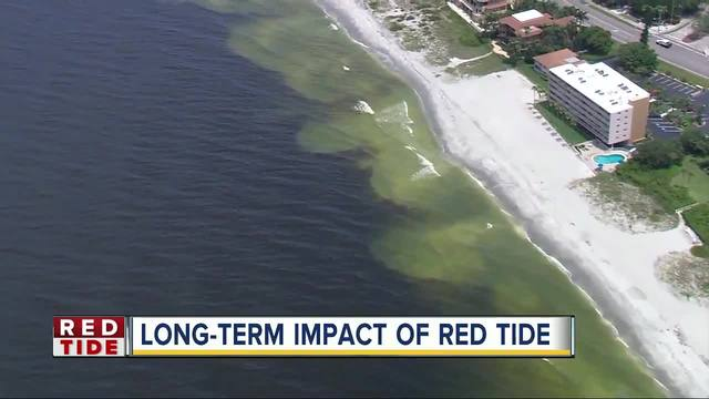 Red Tide-s potential long-term impacts on dolphins- turtles and other sea life