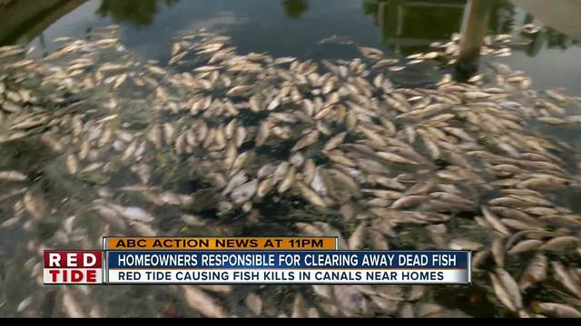 Homeowners tired of dead fish from red tide clogging Manatee County canals