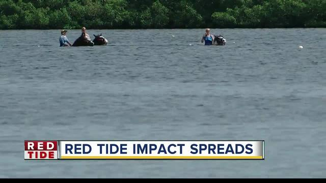 Tampa Bay businesses suffering due to red tide