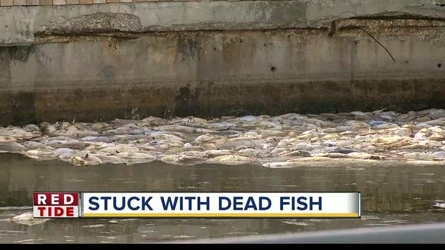 Homeowners tired of dead fish clogging canals