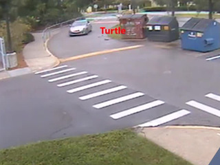 Protected Gopher Tortoise intentionally run over